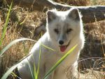 Name Photo 1-Kitsune by Jaz-is-rad