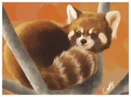 Mr. Red Panda by Espherio