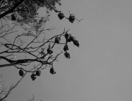 Bats at Dusk by aesthetique