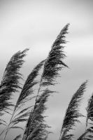 Contrasty Reeds by dseomn