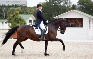 Dressage Cup_65 by CalyHoney