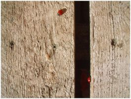 ladybird by froet