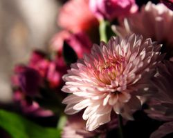 Cut Flower by Woz1