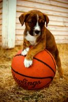 Gonna Be A Ball Player by kylewright