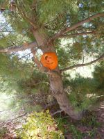 Jack-o-lantern in a tree I by dull-stock