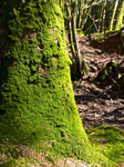 Mossy tree by Poody-champa