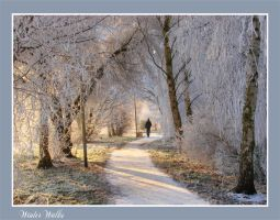 Winter walks by Buble