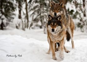 We are the leaders of the pack by PictureByPali