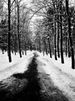Winter Road by The-Bloody-Witch