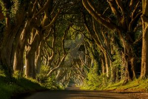 The Dark Hedges by Wanowicz