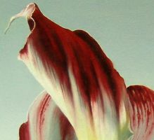 arum detail 5 by sivet-christophe