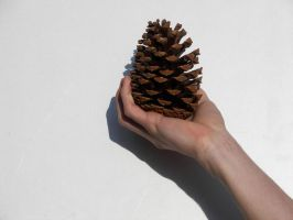 Hand holding a Pine Cone by photohouse