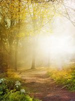 Autumn-Rays - RESTRICTED by AngeliaStocks