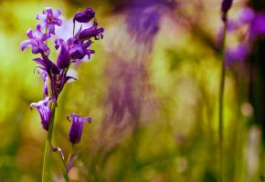 Spring Explosions by bexa