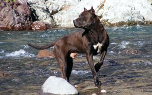 Dog fishing in the mountain 3 by blogdrakeart