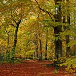 golden october by augenweide