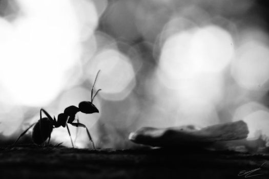 Ant by Ikarusthefirst