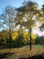 The Autumn Gold 10 by faelivrinen-stock