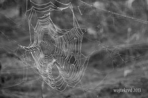 web 01 by psychodelic-candy