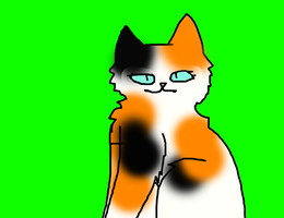 SpottedHeart (one of me warriorcat oc's) by Hollyleaf9990
