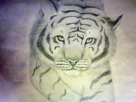 Tiger by wolfycatlover38