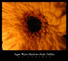 Once upon A white Dahlia by ladyNoe