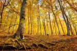 Golden Forest pt.III. by realityDream