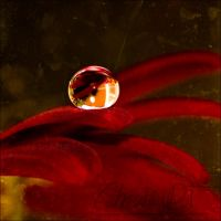 red flower drop by dini25