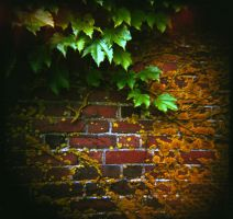 Ivy-1 Woods Hole, Cape Cod by Dreams-Made-Flesh