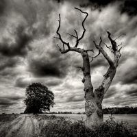 dead wood by sparxphoto