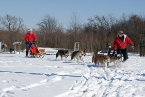 Dog Sled Event 4 by NamekAngelIvy