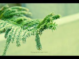 Green by saadchisty