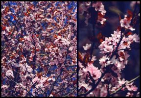 Blossom time. by Bunnis