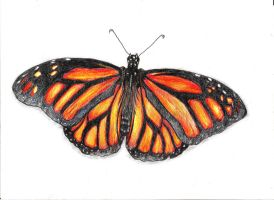 Monarch Butterfly by JeanBlaze