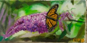 Butterfly on Butterfly bush. by CharlieJacksonPaine3