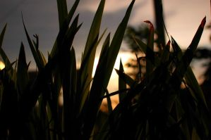 Light Behind The Grass by gonnaday