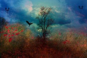 Lost bird.. by hearthy