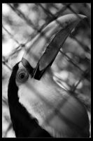 Tucan in BW by Wyco