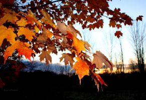 Fall Wallpaper at Dawn by KeswickPinhead