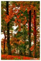 Paints With Leaves by padawan71