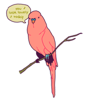 Complimentary Budgie by Ondinel