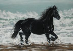 Black horse on beach by davebennett007