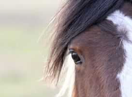 Horse Eye by adambrowning