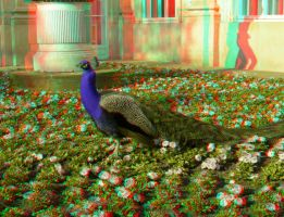 The Peacock 3D Anaglyph by yellowishhaze