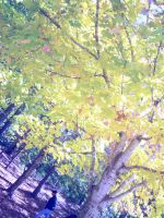 Autumn Tree 3 by lorewith-na-athend