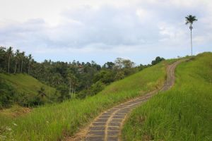 Ubud Ridge Walk by ProfSmiles
