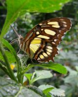 Butterfly by TreLeo