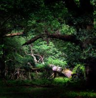 forest haven by smev