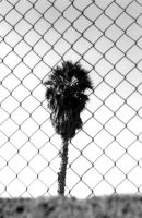palm by luer