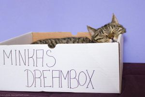 Minkas Dreambox by hoschie